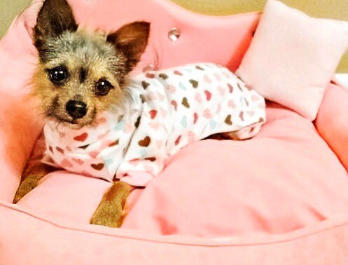Miley Jo  in her new, very posh princess bed by Dog Crush Boutique.