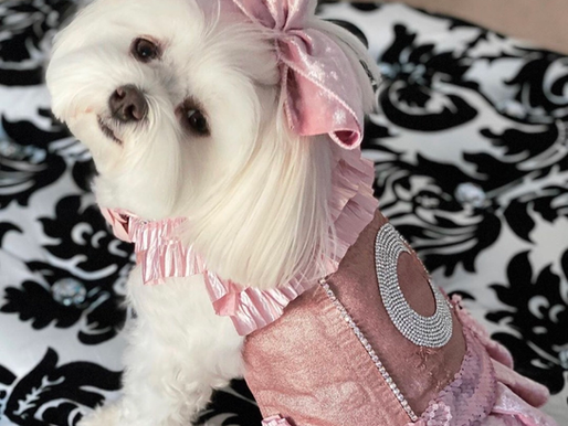 This posh pet is so fashionable and always coordinated. We love it!