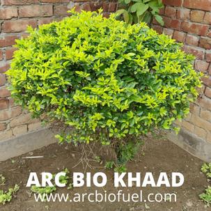 ARC BIO KHAAD (10).png