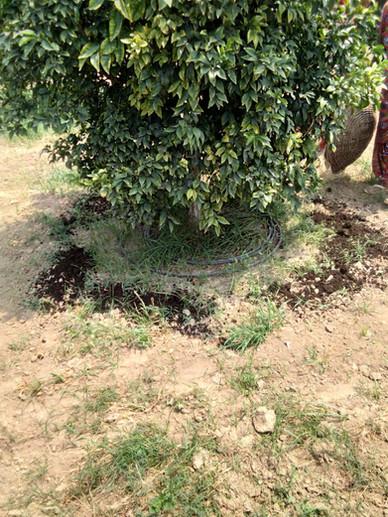organic manure fertilizer by arc bio fuel barnala punjab