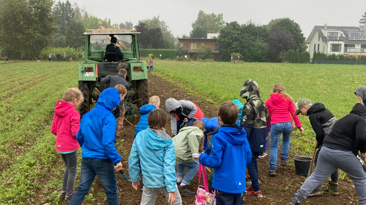 Kartoffelernte auf dem Seidlhof (4.Klassen)