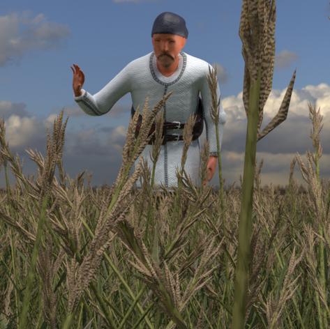 Opa im Weizenfeld