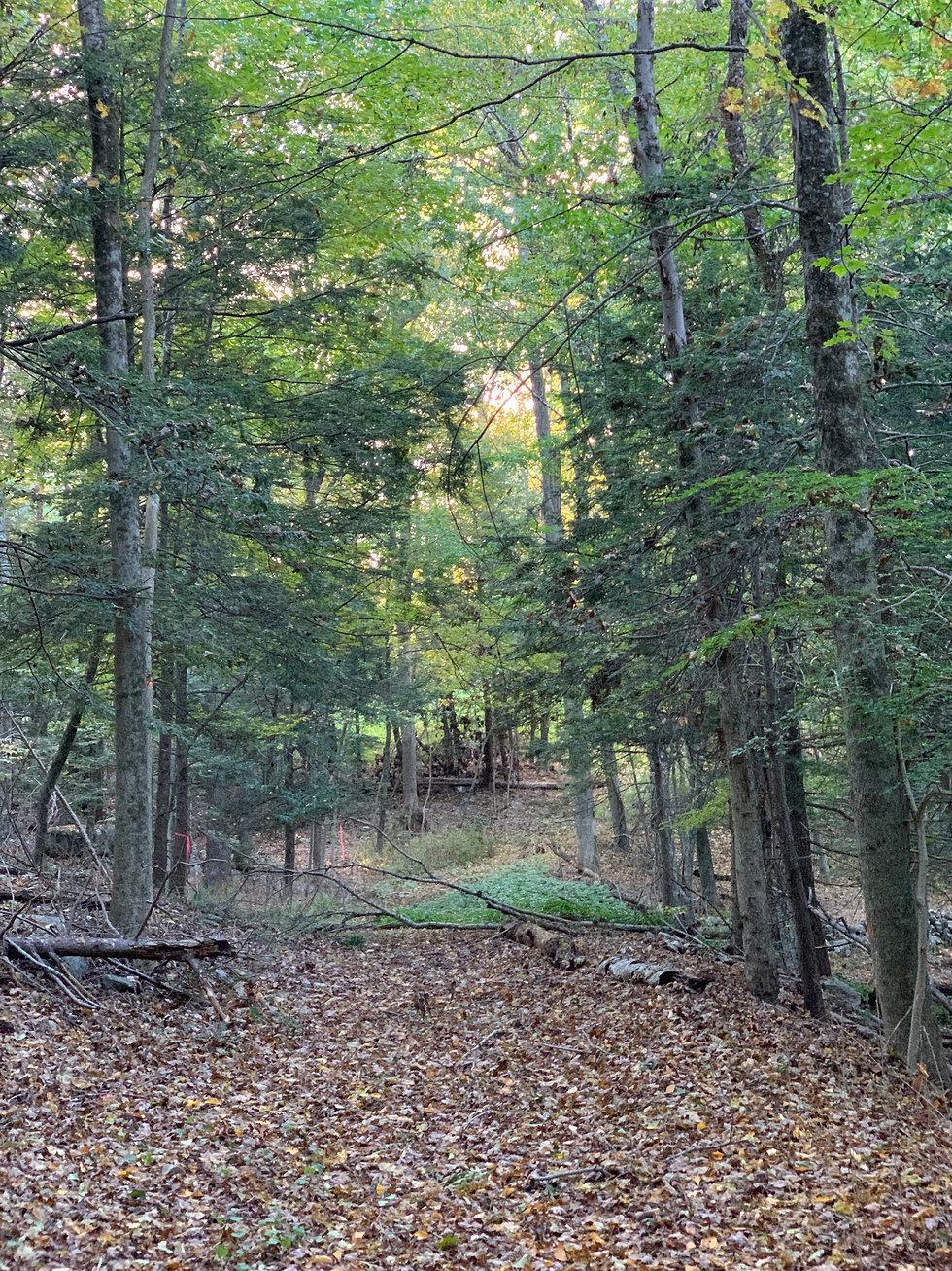 nrvt_trail_section_redding_04.JPG