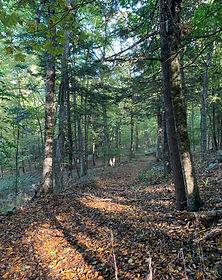 nrvt_trail_section_redding_03.JPG