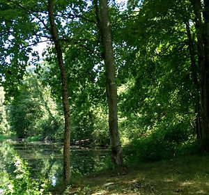 nrvt_trail_section_ridgefield_02.jpg