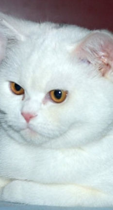 wite kittens
