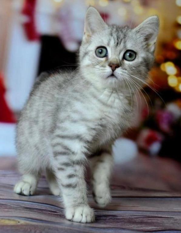 cat4_edited