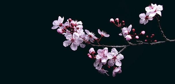 kirsikka-etusivu-edit5.jpg