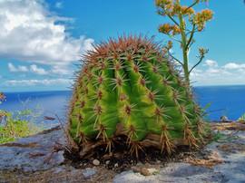 cactus shirley heights (2).JPG