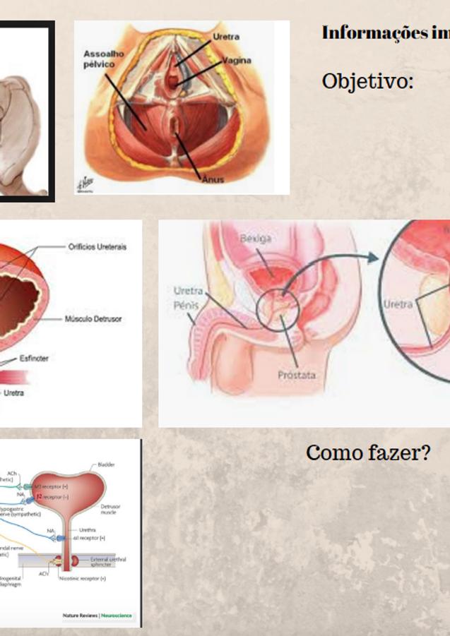 prostata e a saude sexual