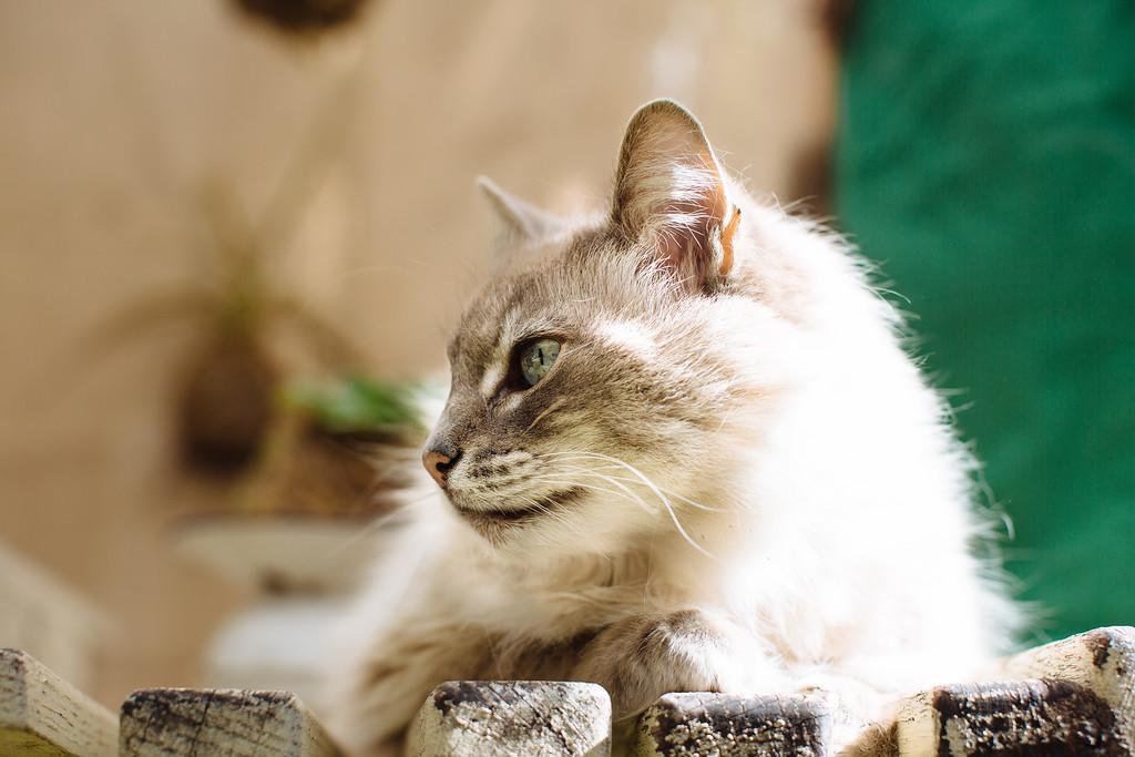 Cloe, the garden kitty