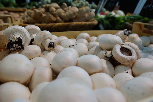 Champignon blanc ou brun