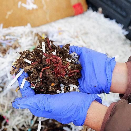 Fertilives 500 Count Red Wiggler Live Composting Worms