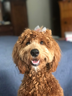After first groom