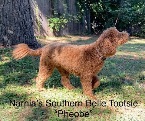 Tootsie Pheobe Stackish 2020.jpg