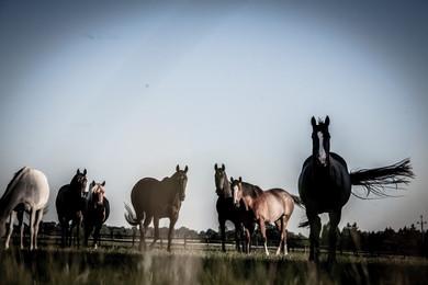 konie-1.jpg