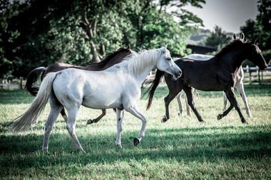 konie-2.jpg