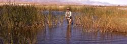 Warm water fishing for bass