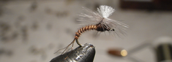 Allen_Parachute Fly