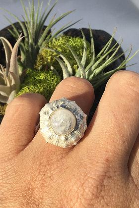 Sea Urchin Calling