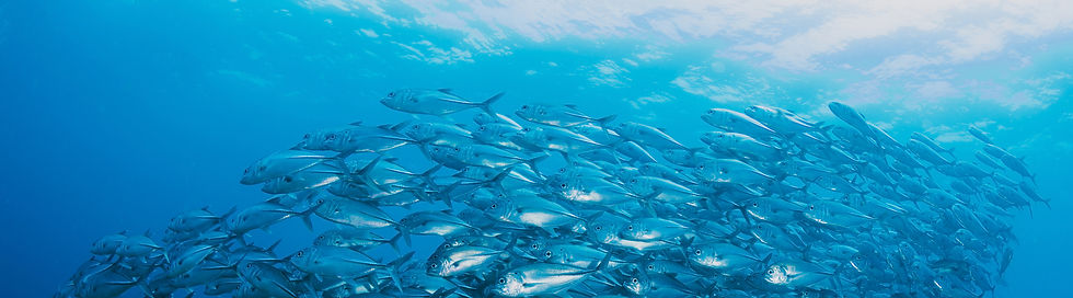 shoal-fish-underwater copy.jpg