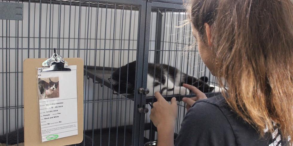 Cat Volunteer Day - AAR