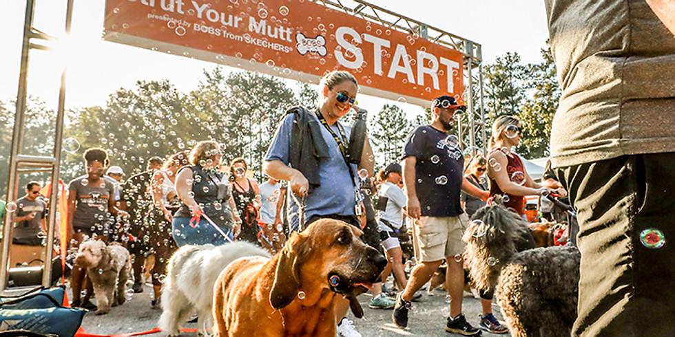 Strut Your Mutt Fundraiser Walk