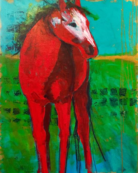 Red Pony on Turquiose