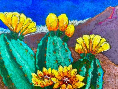 Cactus Blossoms - 1.jpg