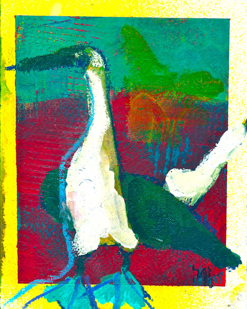 'Blue Footed Booby'