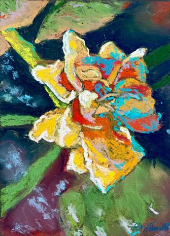Daffodil Blossom - 1.jpg
