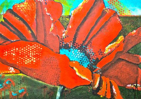 'Backyard Poppy II'
