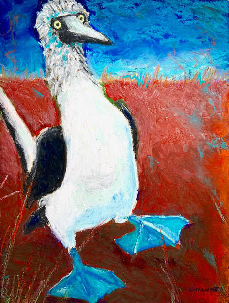 Blue Footed Boobie Dance