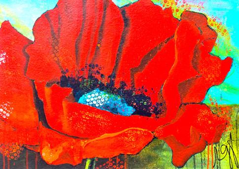 'Backyard Poppy'