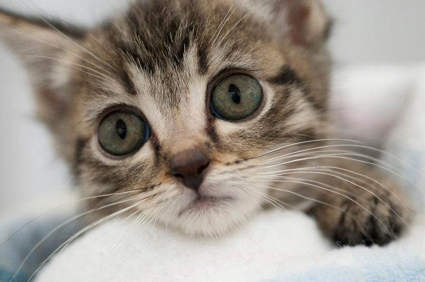 kitten-small.jpg