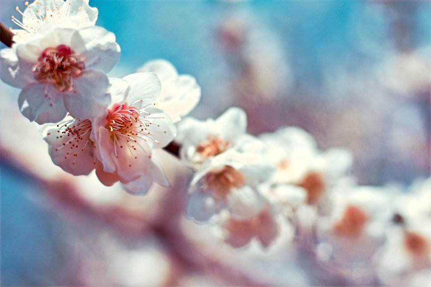 selective%20focus%20photography%20of%20white%20petaled%20flowers%20during%20daytime_edited.jpg