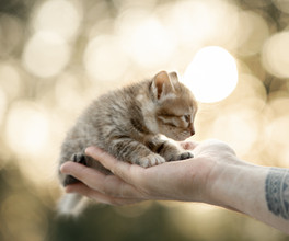 солнечный котенок.jpg
