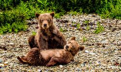 Brown bear sibling cubs.