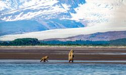 Beat at Hallo Bay, Alaska