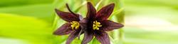 h2-chocolateflowers.jpg