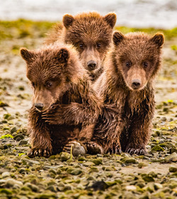 Adorable spring bear cubs.