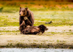 A bear sow and cub