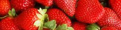 h2-strawberries1.jpg
