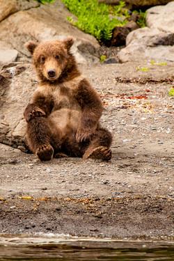 Spring bear cub