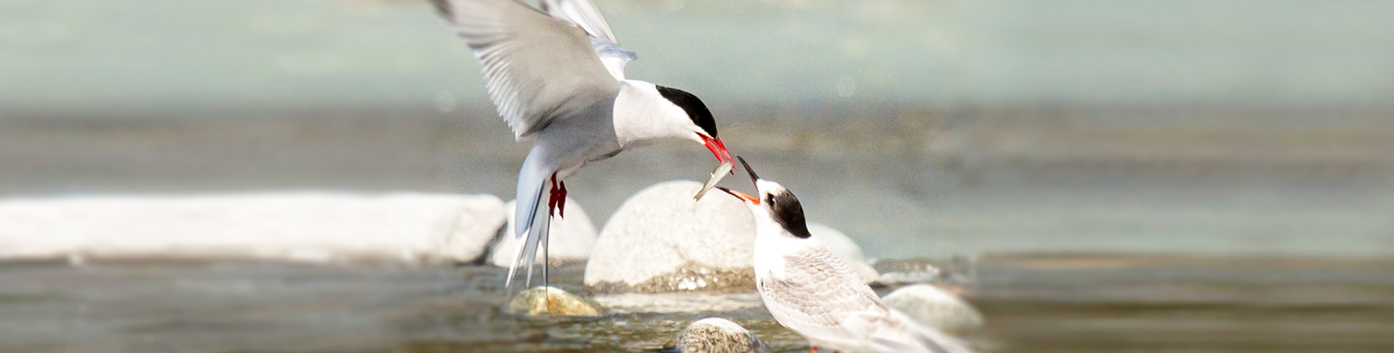 H2-feedingbirds2b.jpg