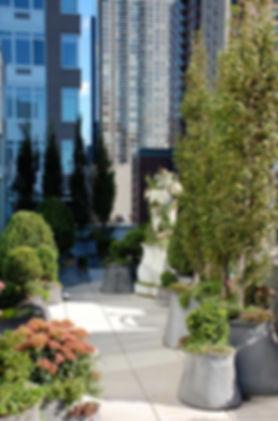 city-terrace-3-676x1024.jpg