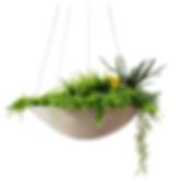 Planter with white background