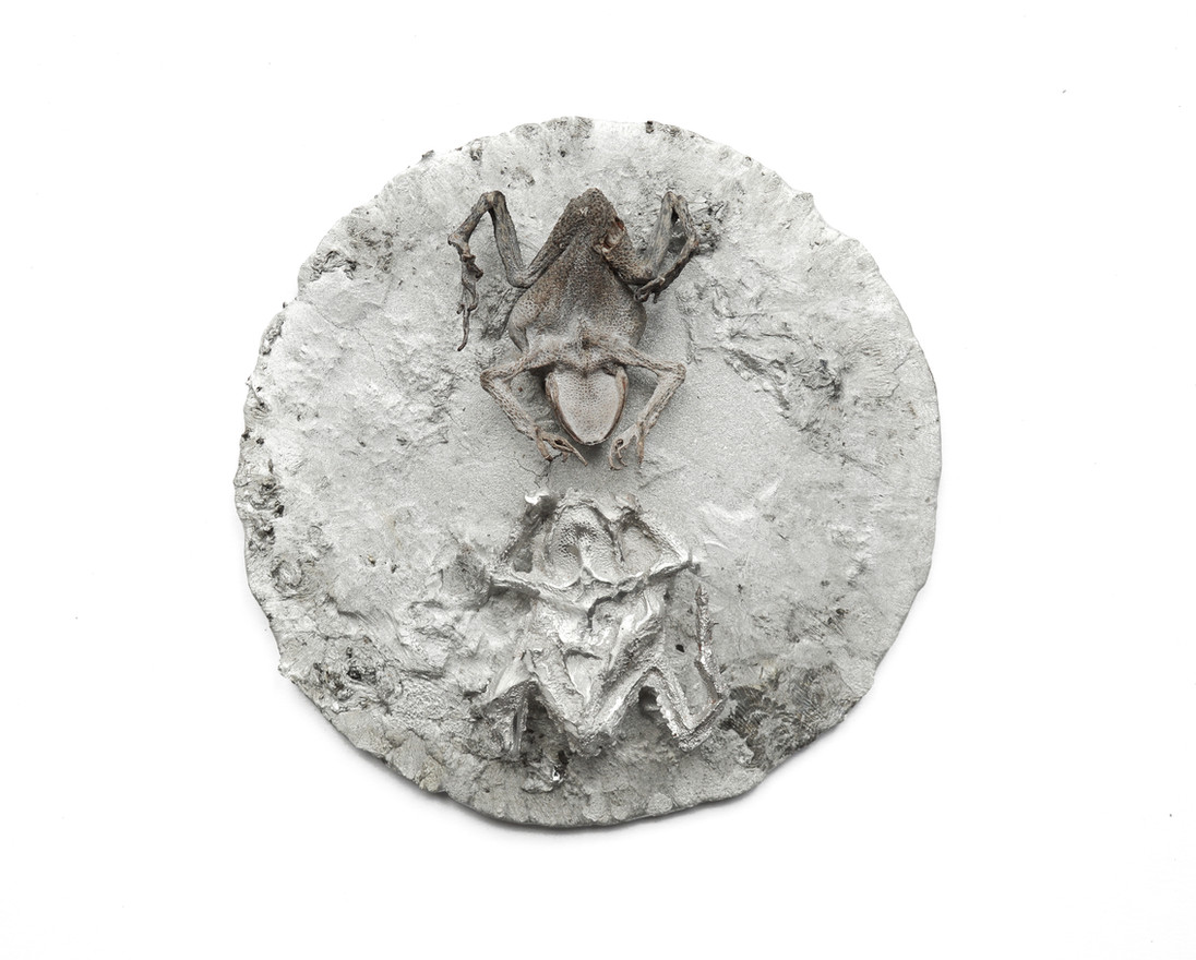 Untitled (alchemical toads), 2018 Tin, petrified toad, tin cast of toad 15cm x 15cm x 2cm (wall hung)