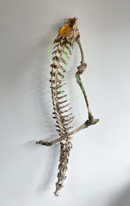 Torchbearer, 2020 Spine and limb bone, glass, plastic 83 x 30 x 11cm