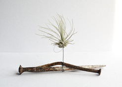 Chantal Powell Airplant Sculpture.jpg